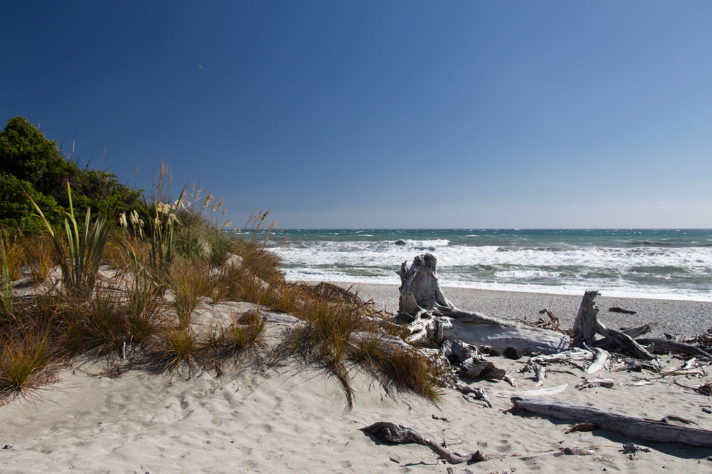 Neuseeland Südinsel Landschaften – West Coast Treibholz am Strand | SOMEWHERE ELSE
