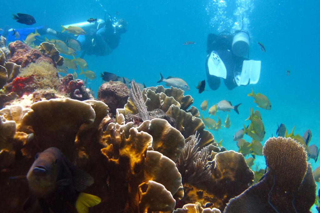 Tauchen in Mexiko – MUSA Unterwassermuseum Korallen, Fische und Taucher | SOMEWHERE ELSE