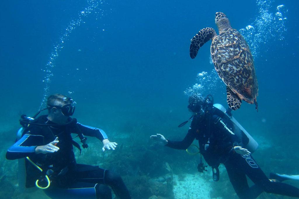 Tauchen in Mexiko – MUSA Unterwassermuseum Schildkröte mit uns | SOMEWHERE ELSE