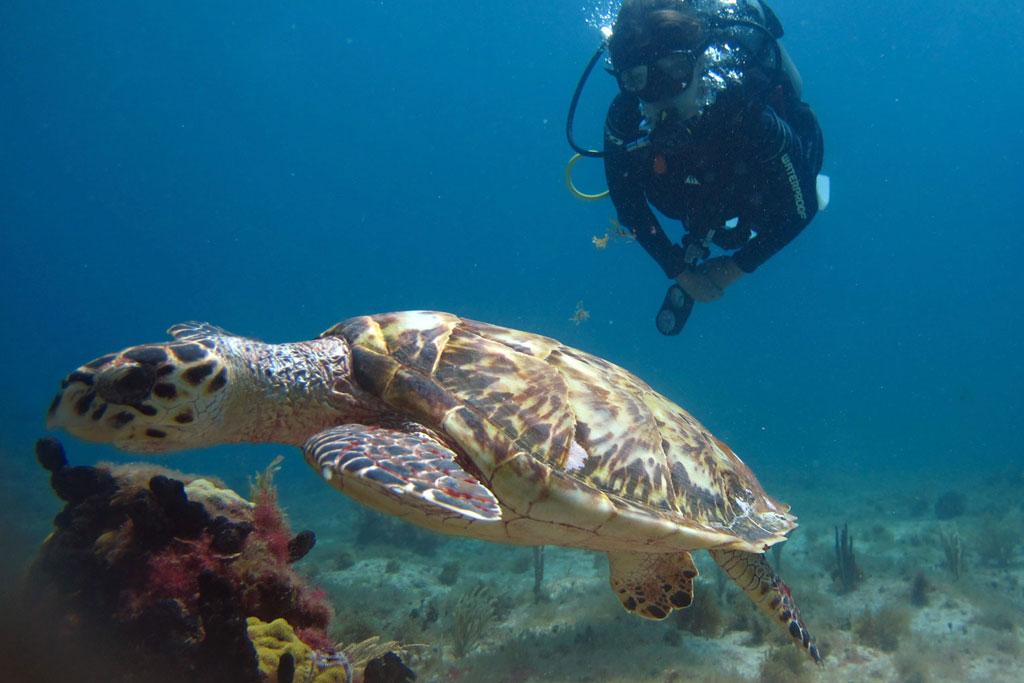 Tauchen in Mexiko – MUSA Unterwassermuseum Schildkröte | SOMEWHERE ELSE