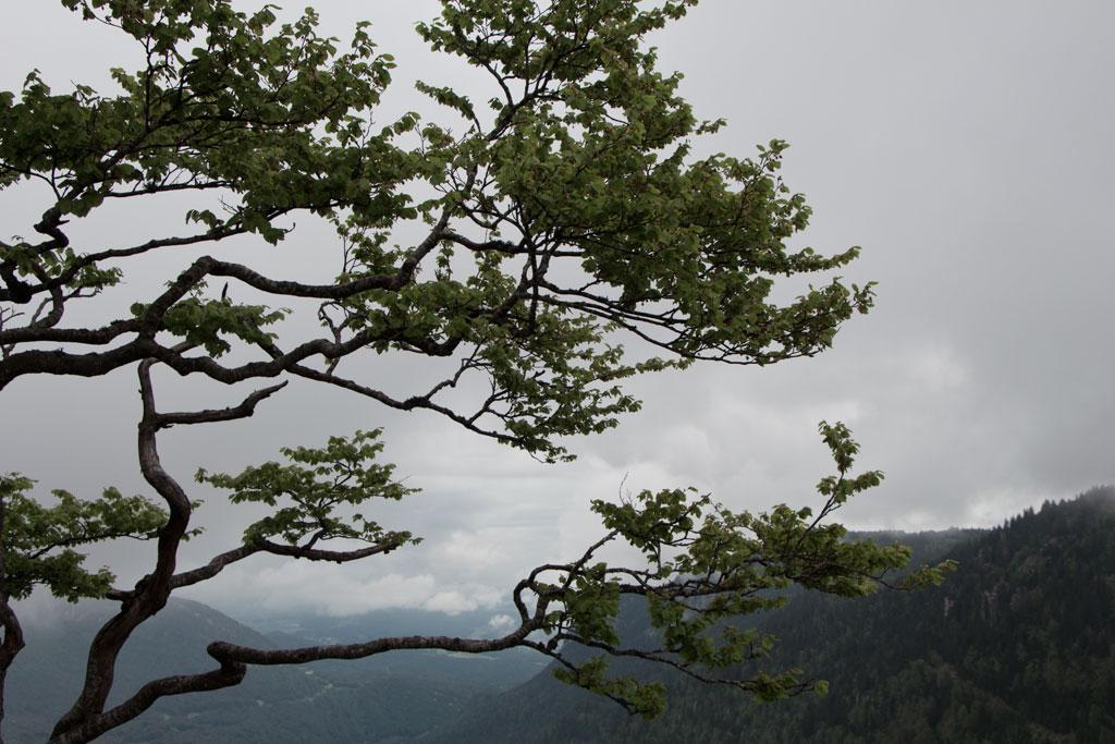 Schweiz Jura – Creux du Van – Baum über Abgrund | SOMEWHERE ELSE
