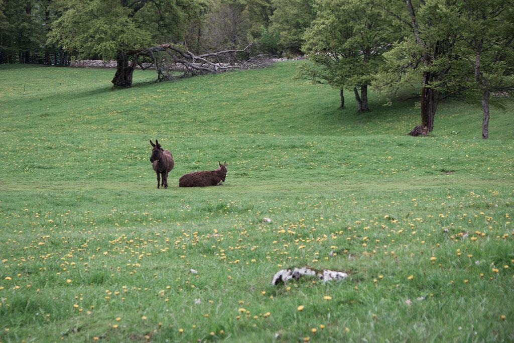 Schweiz Jura – Creux du Van – Esel auf der Almwiese | SOMEWHERE ELSE