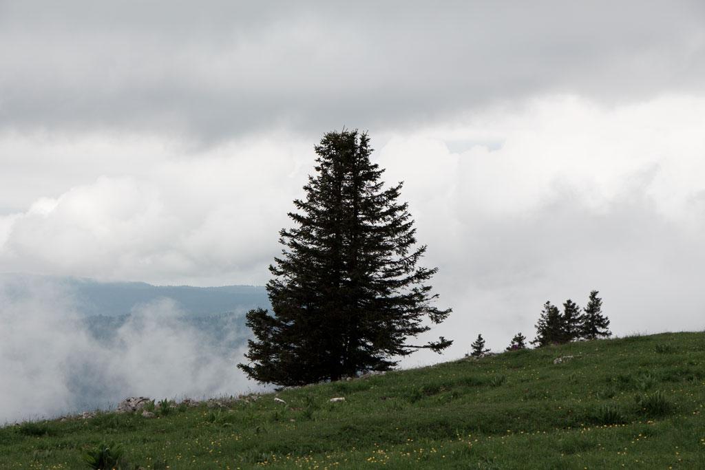 Schweiz Jura – Creux du Van – Tannen und Wolken | SOMEWHERE ELSE