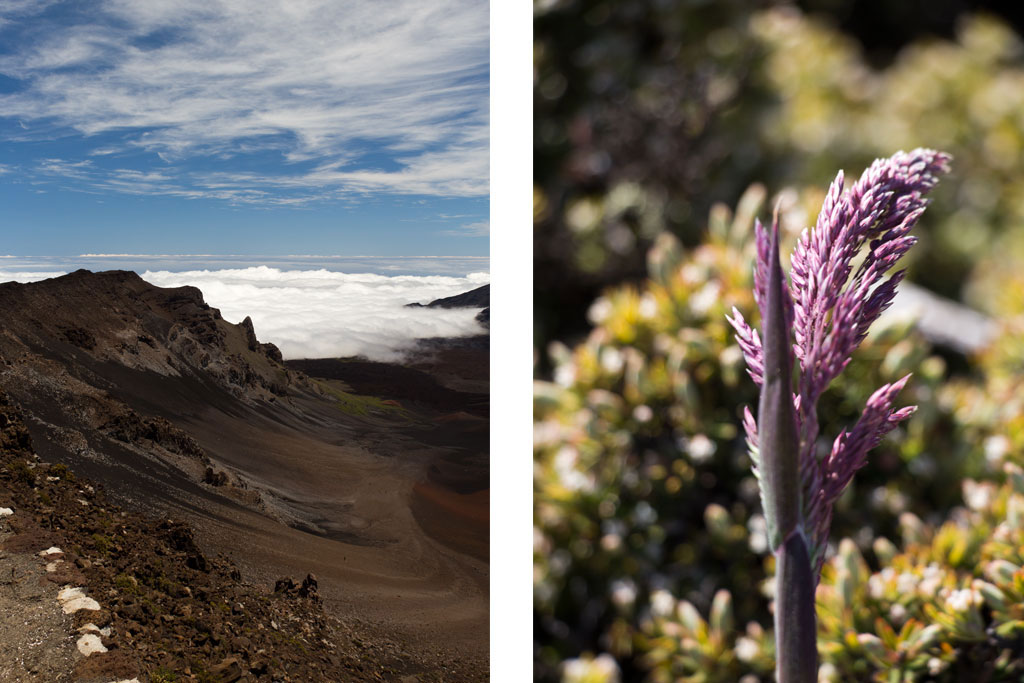 Maui Hawaii – Krater und Vegetation des Haeakala Vulkans | SOMEWHERE ELSE