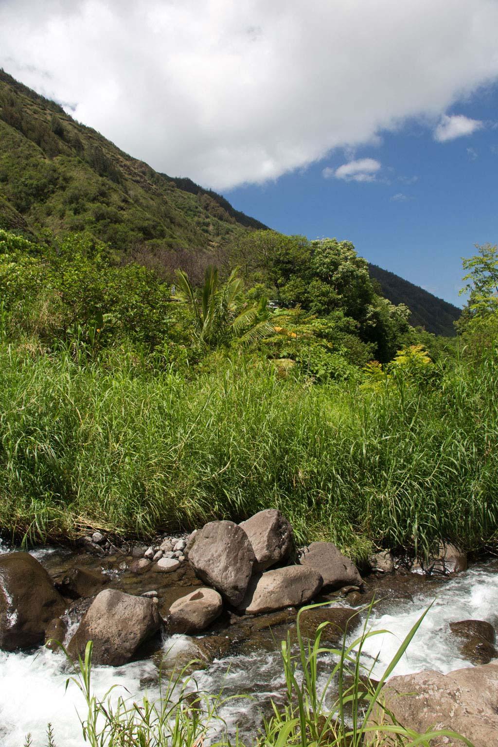 Maui Hawaii – Fluss im Iao Valley State Park | SOMEWHERE ELSE