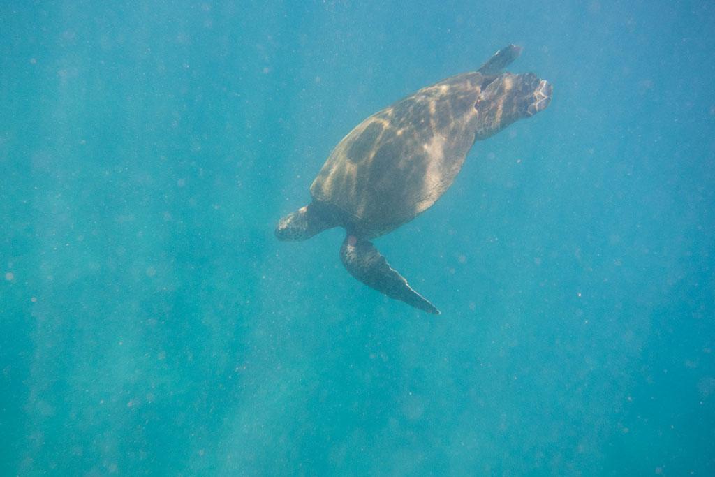 Maui Hawaii – Makena Landing Schnorcheln mit Schildkröte | SOMEWHERE ELSE