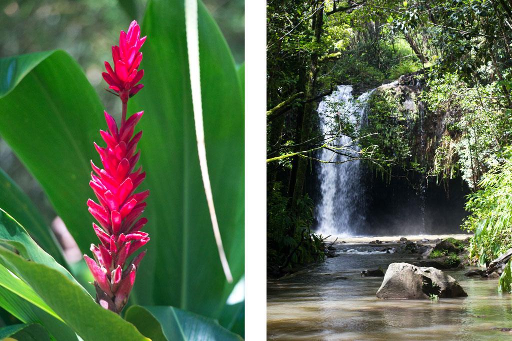 Maui Hawaii – Twin Falls Dschungelblüte und Wasserfall | SOMEWHERE ELSE