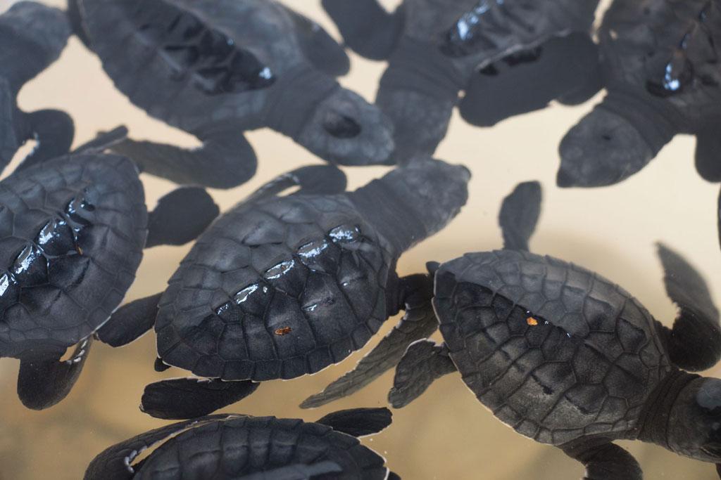 Port Barton – Babyschildkröten | SOMEWHERE ELSE