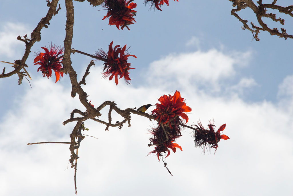Port Barton – Honigsauger an Blüte auf Baum | SOMEWHERE ELSE