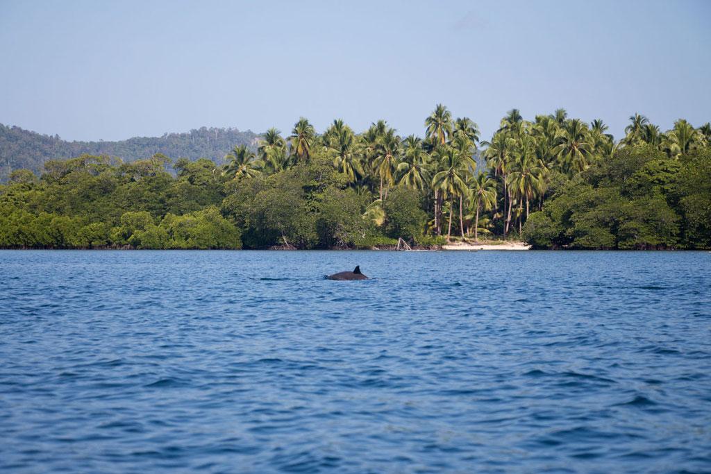 Port Barton – Delfine vor Insel | SOMEWHERE ELSE
