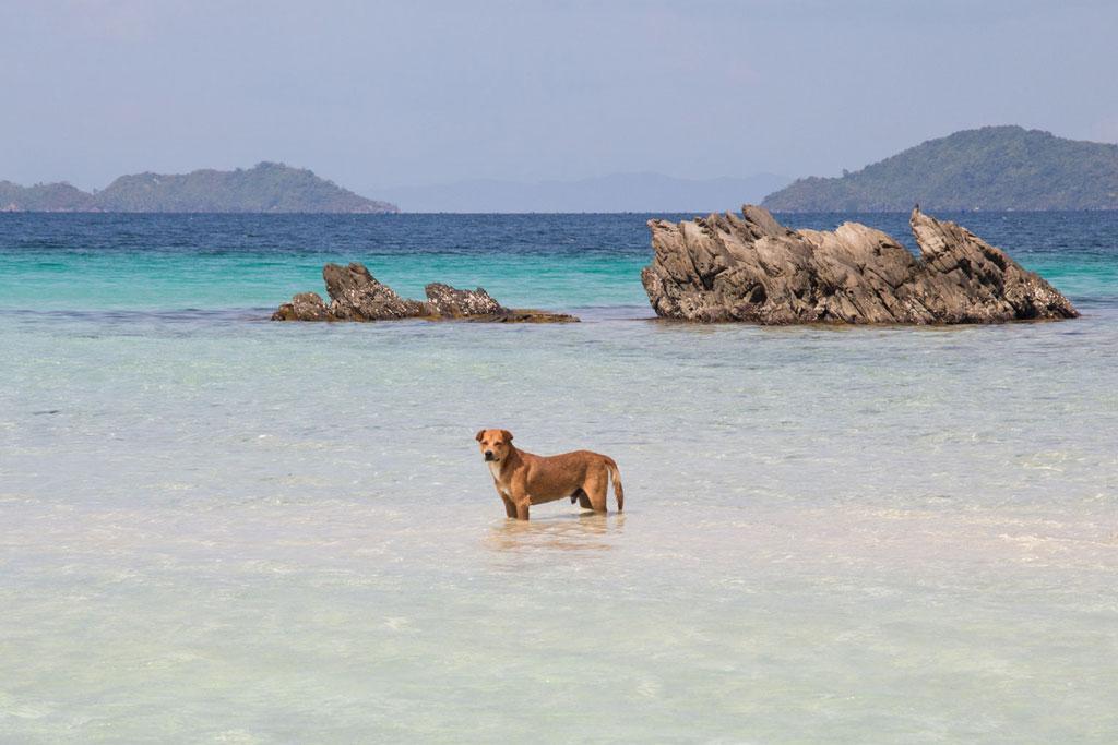 Port Barton – Insel Exotica Hund im Meer | SOMEWHERE ELSE
