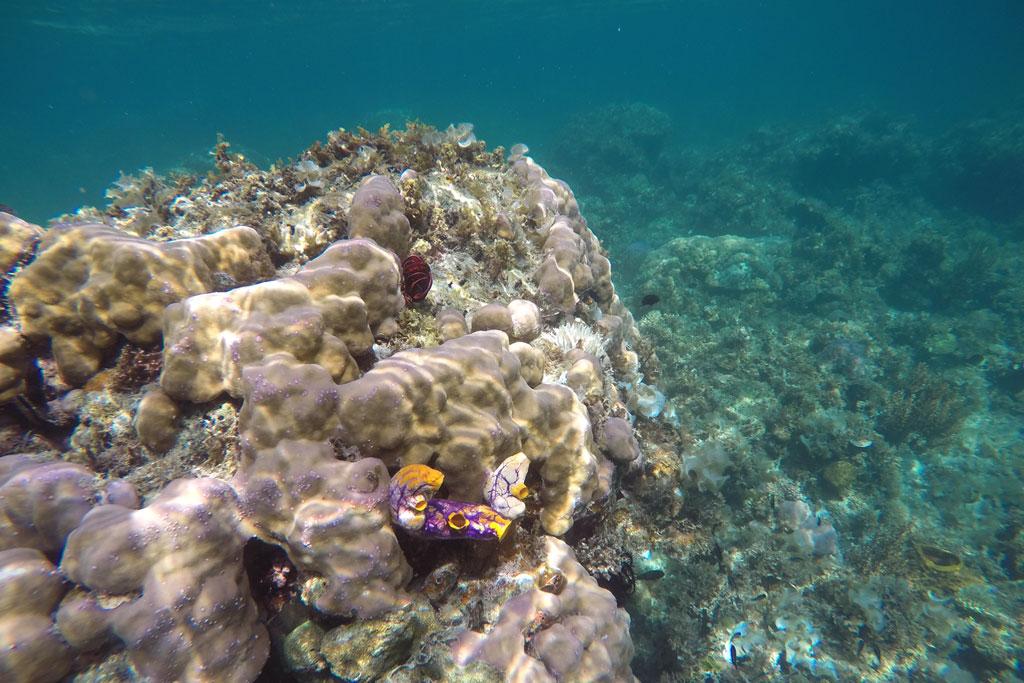 Port Barton – Korallen beim Schnorcheln | SOMEWHERE ELSE