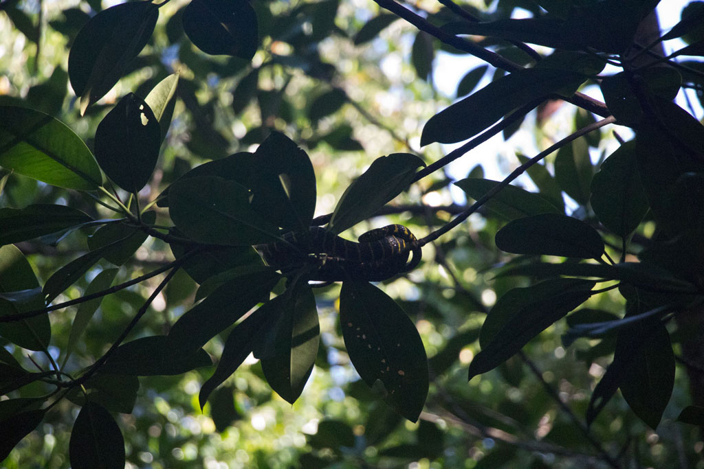 Port Barton – Schlange in Mangroven | SOMEWHERE ELSE