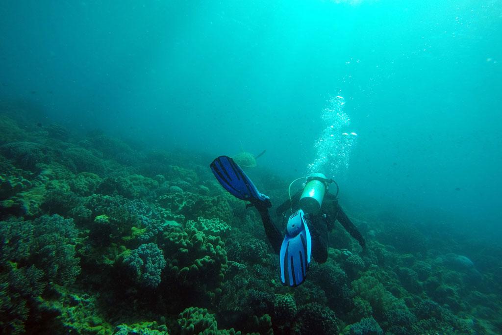 Rückblick – Philippinen Tauchen mit Schildkröte auf Apo Island | SOMEWHERE ELSE